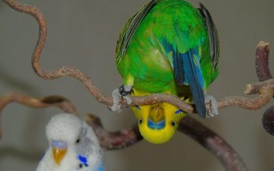 Suživot s papigom u Ytong kući