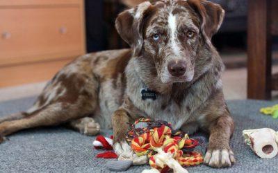 Suživot sa psima u Ytong kući