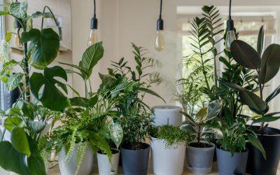Uzgoj hrane i ukrasnog bilja u stanu ili kući